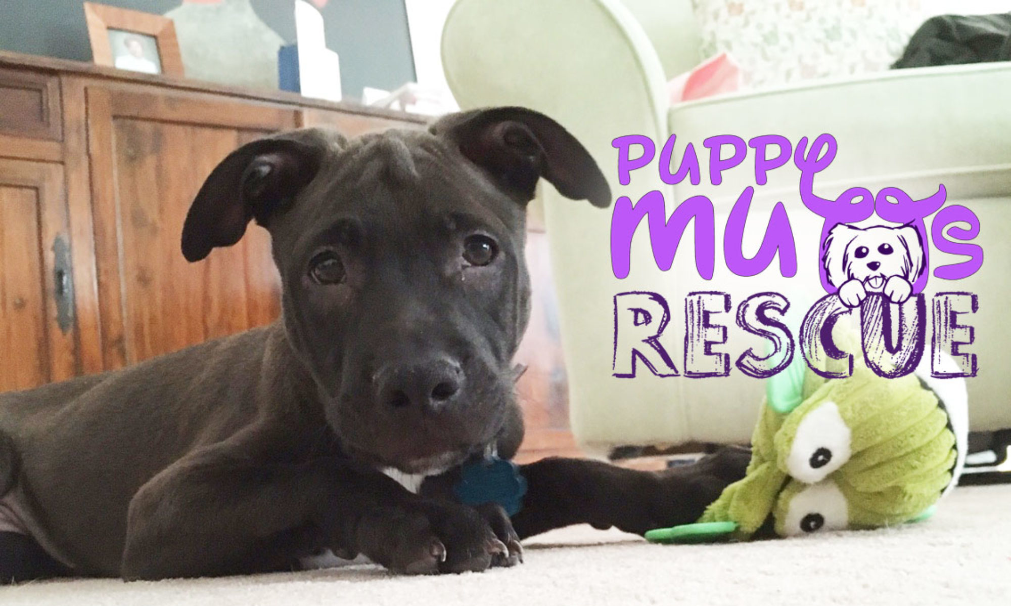 Puppy Mutts Rescue